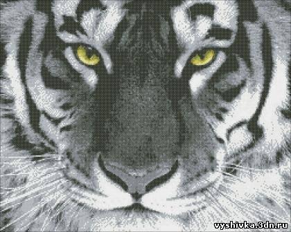 нового года - белый тигр.